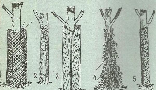 Пять способов укрыть деревья от мороза и холодных ветров