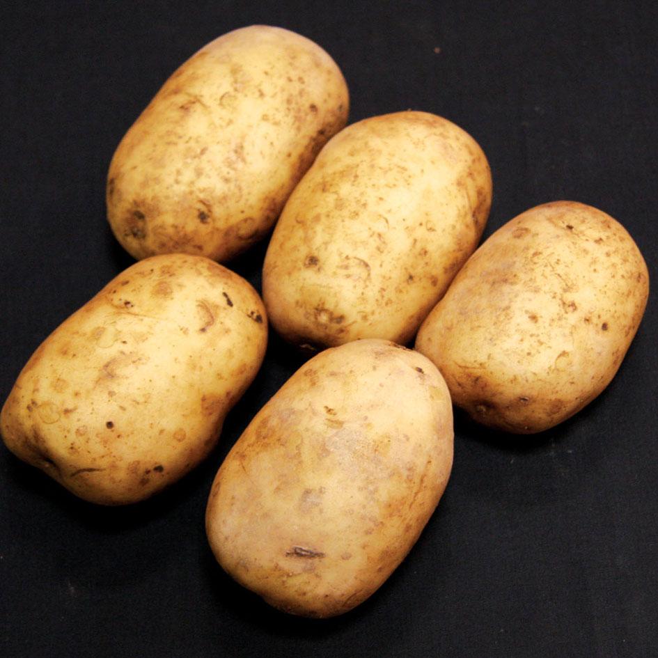 семена картошка витессе купить в казани