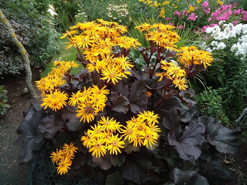 Цветы многолетние уход