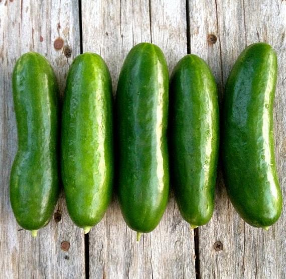 petite-cucumber-seed-penelope-black-diamond-xxx