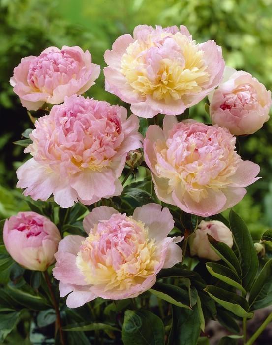 celebrity photo цветы № 123743