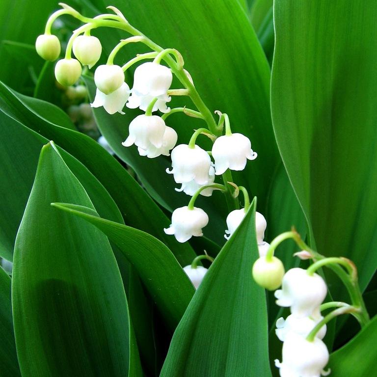 Цветов 350, где купить цветы ландыши в москве