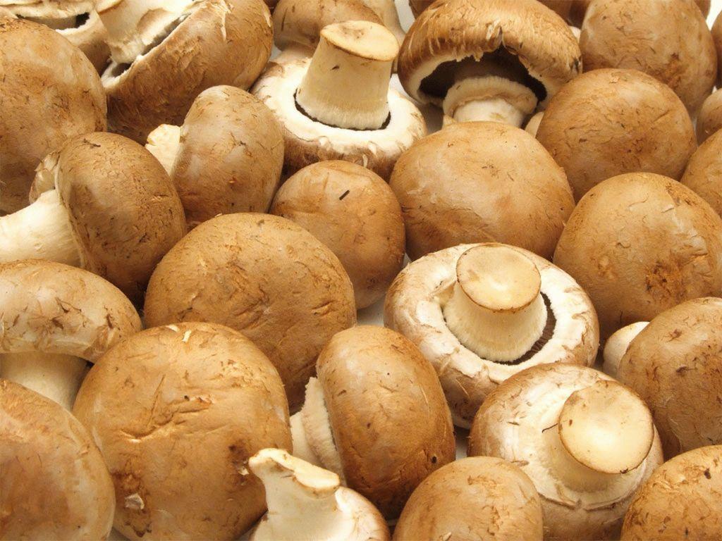 скр грибы в картинках италии растениям