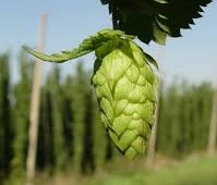 Хмель Hops Brewer