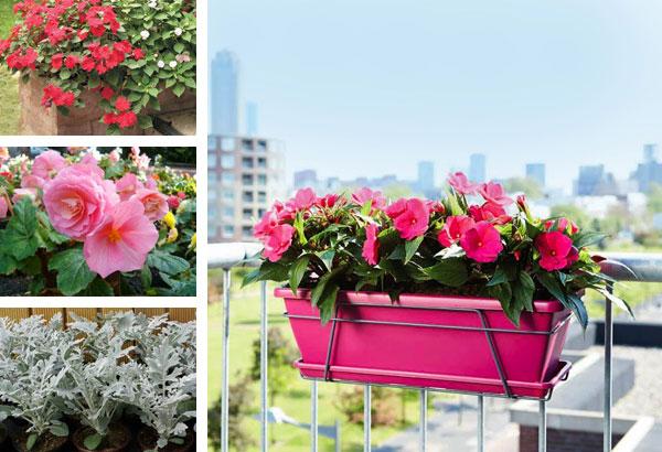 Цветник на балконе эстет - купить саженцы в интернет-магазин.