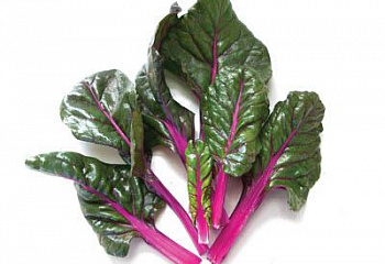 Мангольд  Swiss Chard Magenta Sunset