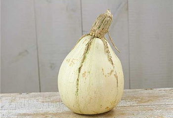 Тыква Squash Tennessee Sweet Potato Squash