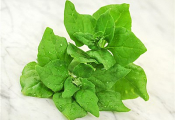 Шпинат Spinach New Zealand