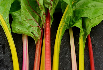 Мангольд  Swiss Chard Five Color Silverbeet