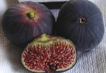 Инжир Fícus cárica Black figs
