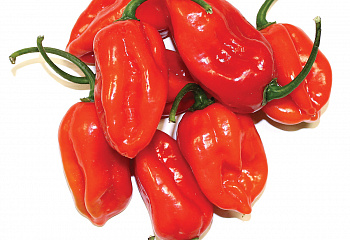 Перец острый Hot pepper Tastemaker Hybrid
