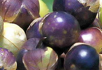 Физалис Purple Tomatillo
