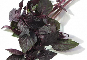Базилик Basil Rosie Purple