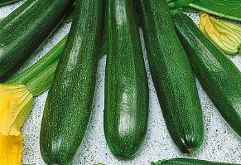 Кабачок Marrow squash Zucchini Spineless Beauty
