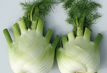 Фенхель Fennel Preludio