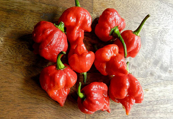 Перец острый Hot pepper Trinidad Douglah Red