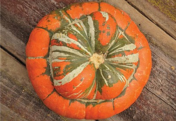 Тыква Squash Turks Cap or Turban Squash
