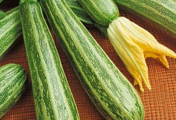 Кабачок Marrow squash Zucchini Safari
