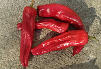 Перец острый Hot pepper Tesuque Chile Hot Pepper